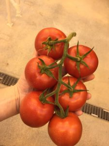 Cornell CALS looks at the future of CEA and urban farming